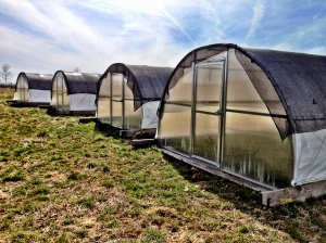 Mobile chicken houses. We have 6 of them.