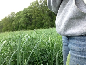 Seriously tall grass
