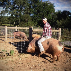 Who needs a horse when you have a 1,000 lb. pig?